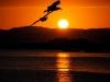 tramonto-gabbiano